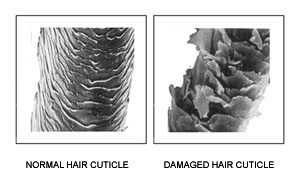 Normal and Damaged hair